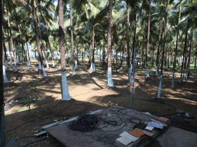 Madhuvan Coconut trees